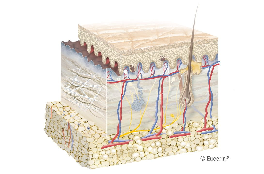 Graphic illustration of skin´s layer.