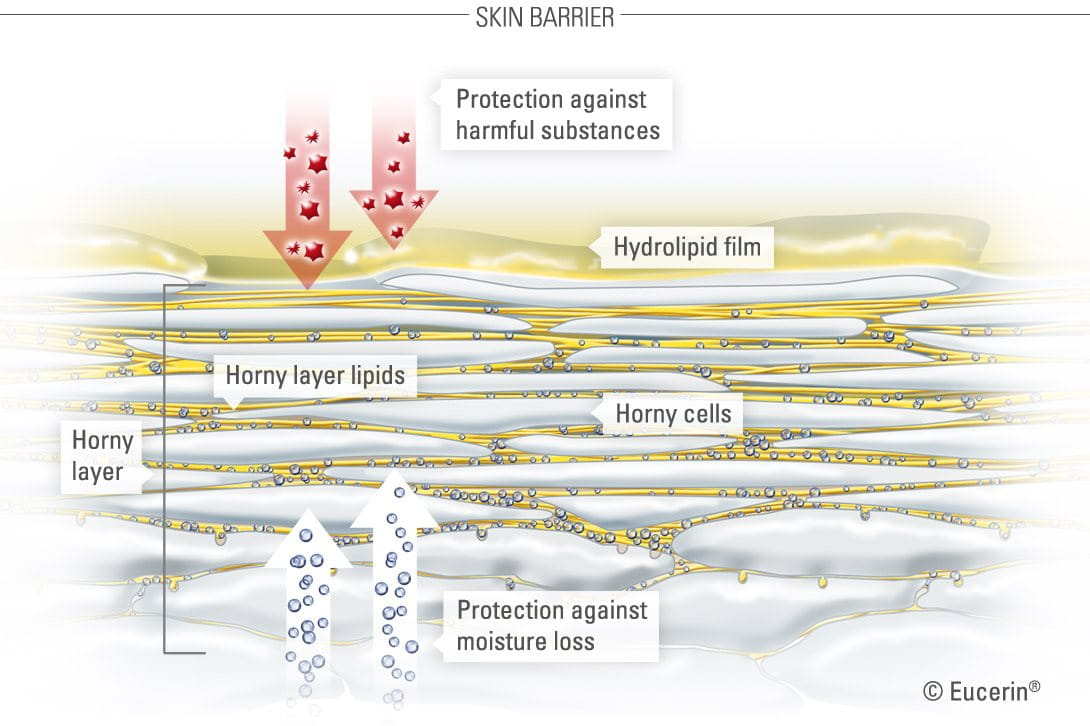 Skin barrier with its skin structure