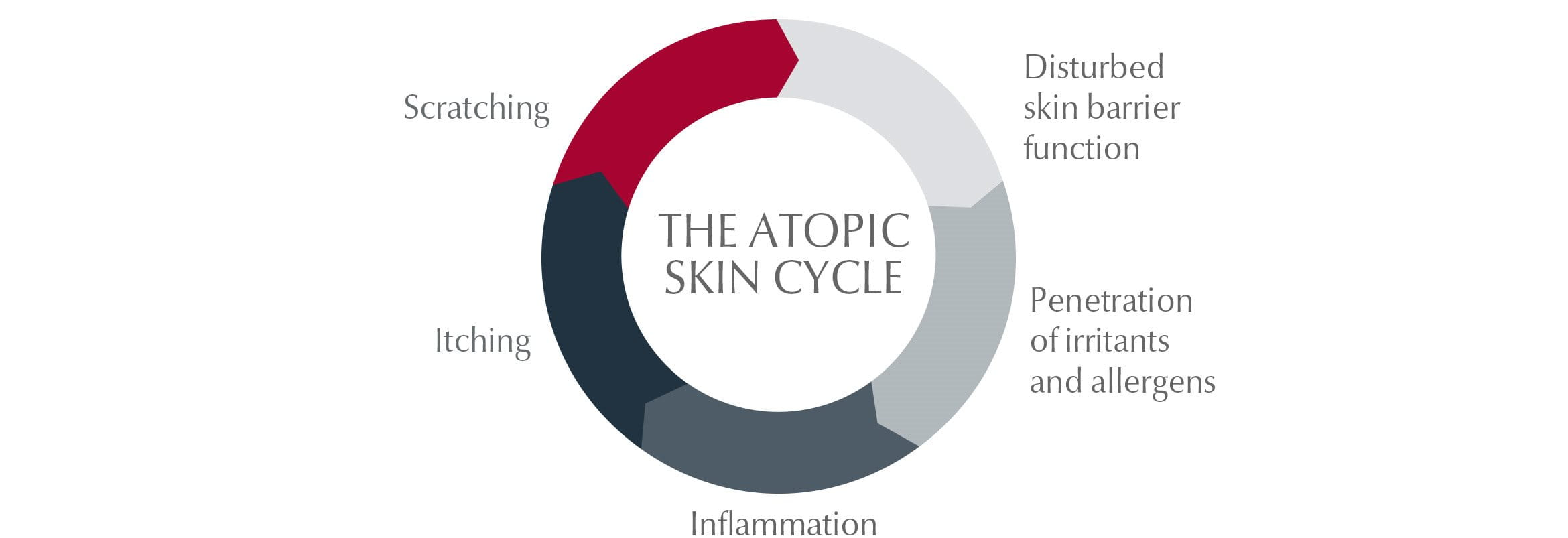 The atopic skin cycle