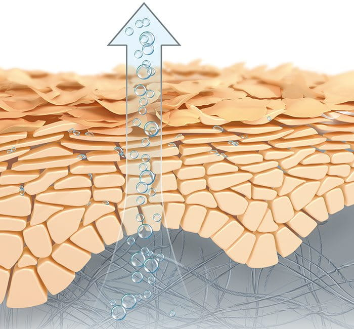 Illustration of natural moisture factors evaporating through the skin